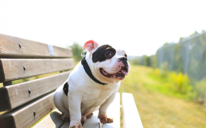 Animals for Adoption - Calgary Humane Society