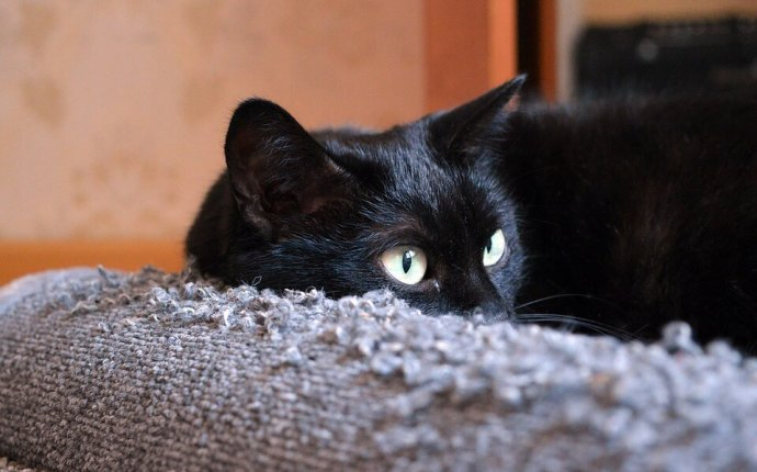 Black Cats Overlooked in Shelters, Studies Show | peta2