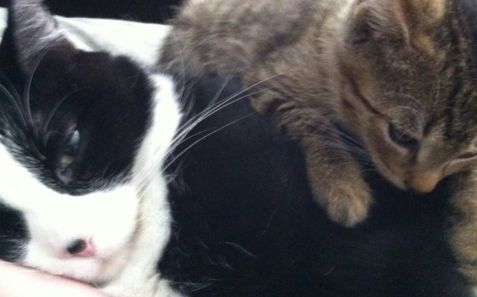 Buddies Place Cat Rescue of Texas | We ve Got Cattitude!