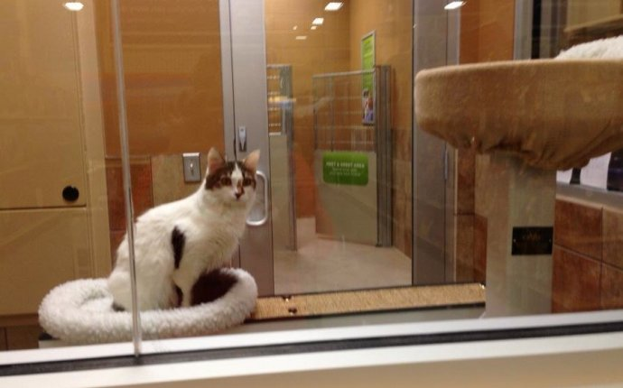 CAT FRIDAY: Spokane Humane Society s new adoption center at