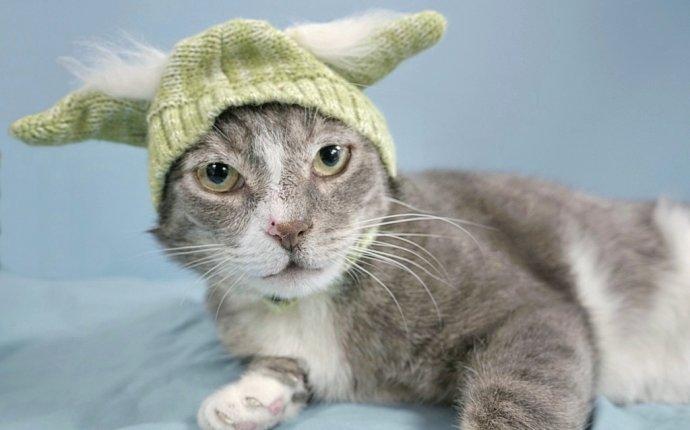 Dog & Cat Adoption Rochester, NY | Animal Shelter