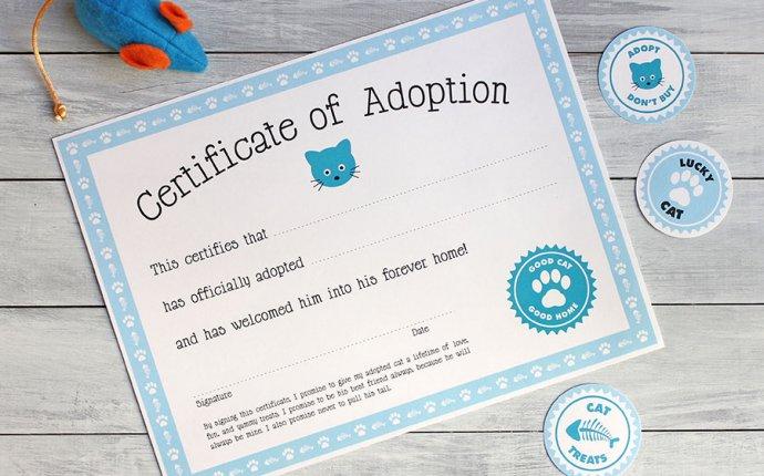 Free printable cat adoption kit | Chickabug